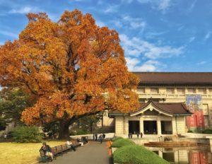 viaje a japon tikun centro del bienestar guia